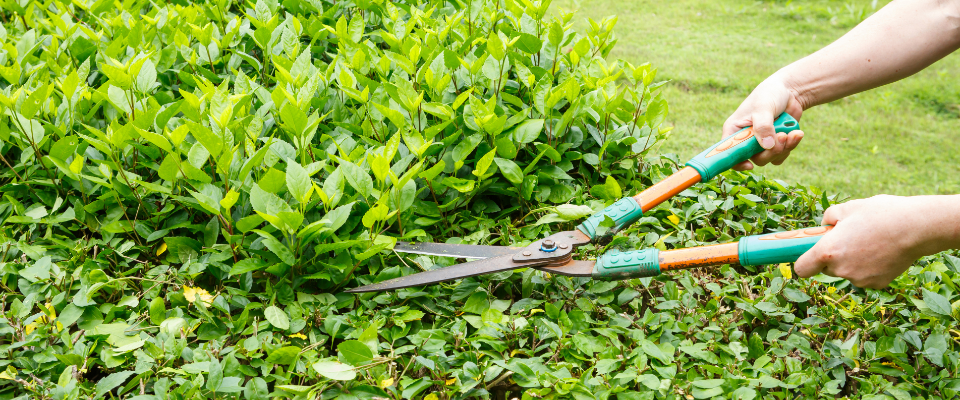 Sauvegrain Paysage s'occupe de la taille de vos végétaux